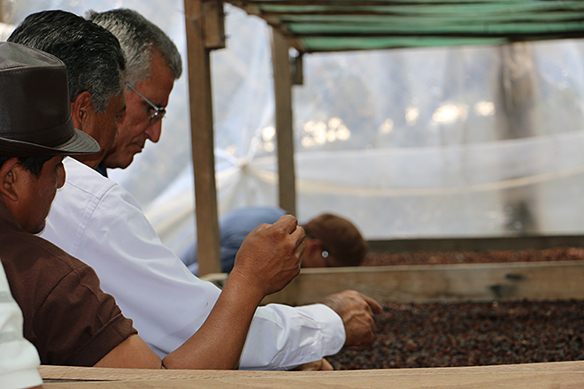 Honduras – Copan Coffee Fest, a chance of encounter, exchange and growth for the coffee value chain