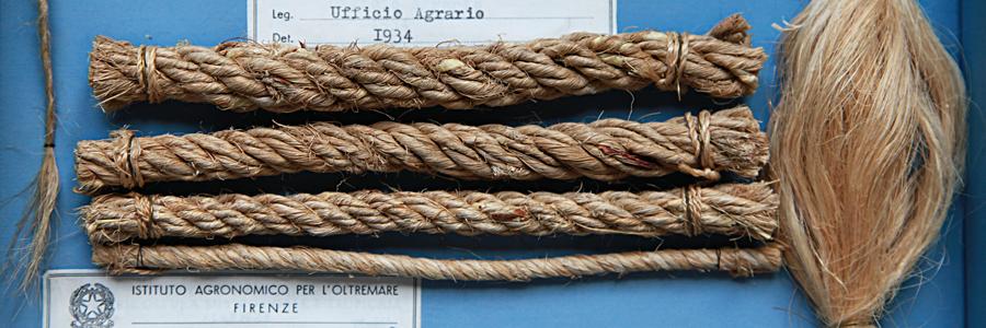 sede AICS di Firenze • museo agrario tropicale
