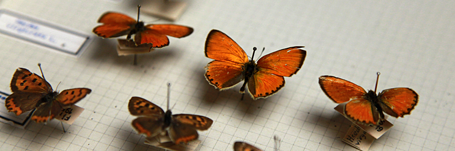 Sede Aics Firenze - Collezioe entomologica