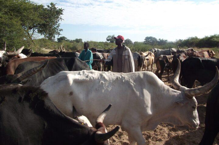 One Health, a Teramo un'eccellenza italiana che guarda all'Africa
