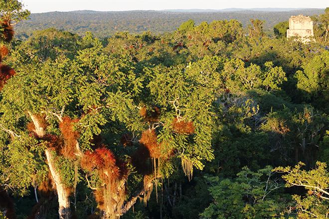 Giornata Mondiale Ambiente - Immagine selva Pete in San Salvador